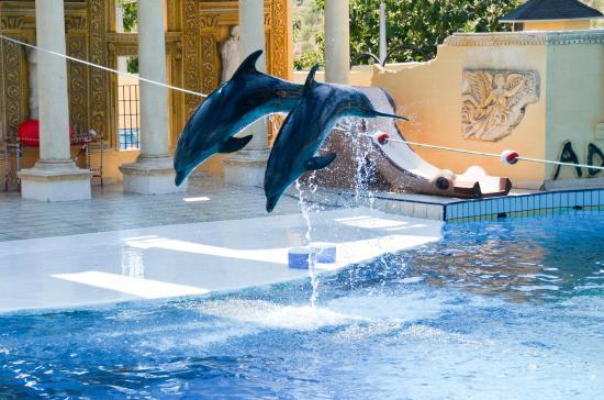 İzmir Cikisli Şirince Dolphin Park